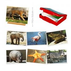 FOTOGRAFIES ANIMALS. 50 FOTOGRAFIES AMB ANIMALS EN EL SER MEDI. CAPSA CARTRÓ. JOGUINA A PARTIR DE 3 ANYS